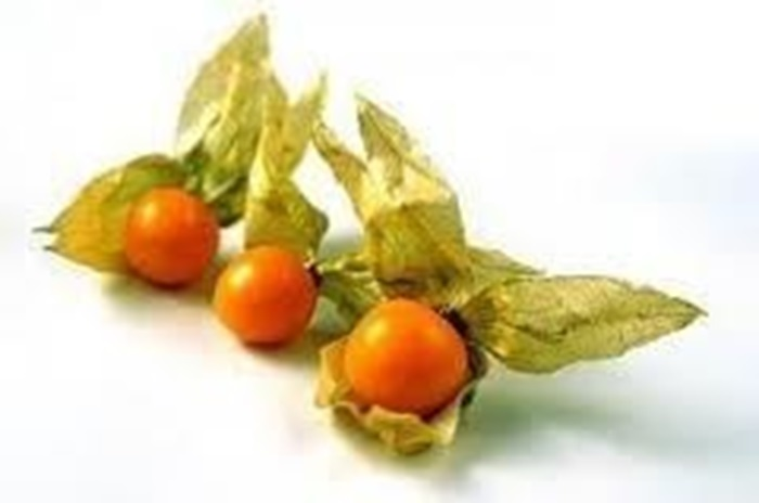 Picture of Golden Incan Berries Χρυσά Μούρα